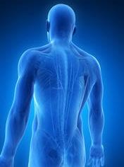 Patologie del sistema neurofasciale osteopata roma nord monte sacro talenti