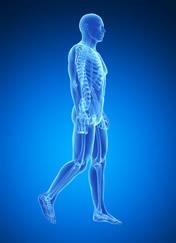 osteopata roma nord patologie del sistema strutturale