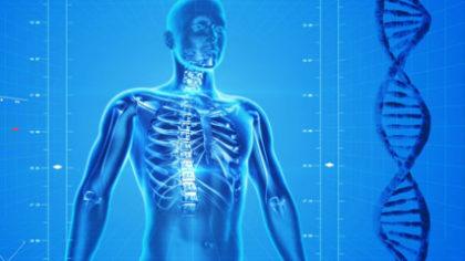 cosa è l'osteopatia un articolo di Silvia Vitale Osteopata Roma Montesacro