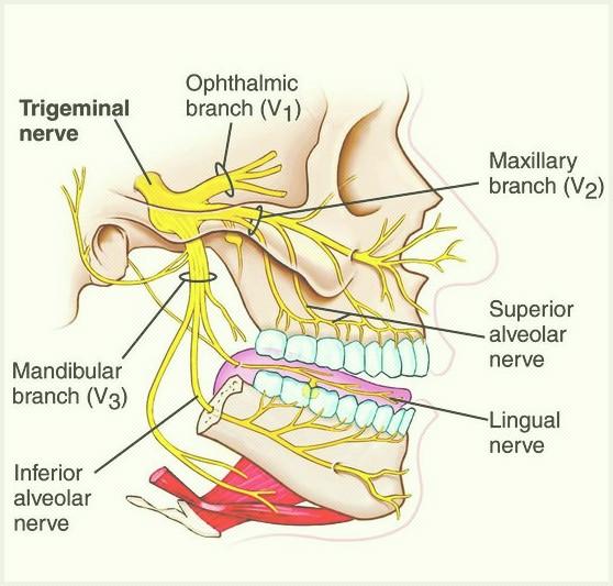 nervo trigemino e mal di testa cura osteopatica